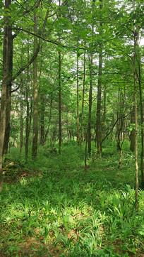 阳光下的森林