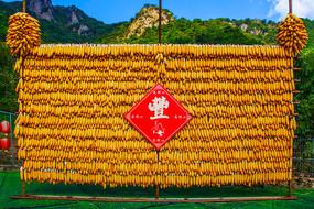 辽阳通明山玉米棒子丰收墙