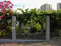 住宅小区的葡萄架