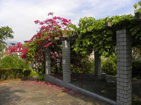 住宅小区休闲场所的葡萄架