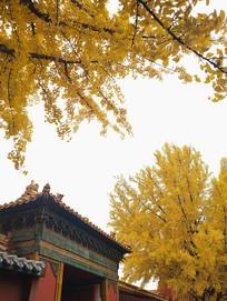 北京故宫延禧宫