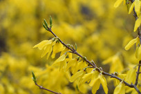 春天来时花满枝