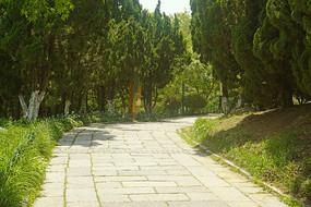 青岛植物园林荫步行道