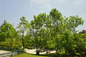青岛植物园树林