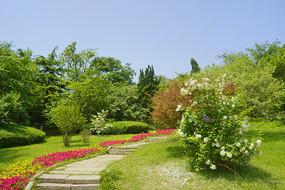 青岛植物园园林绿道石梯
