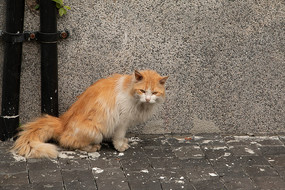 侧身面对镜头的猫咪