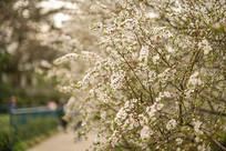 公园的花丛