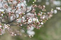 含苞待放的花骨朵