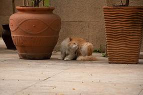 挠痒的猫咪
