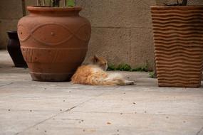 趴着拍摄背对向侧看的猫咪