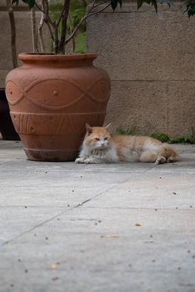 趴着拍摄的猫咪
