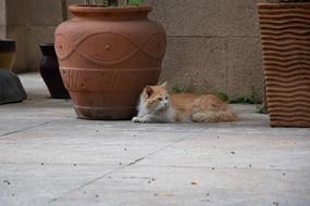 趴着拍摄看向背面的猫咪