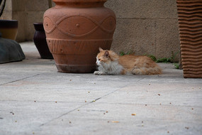 趴着拍摄看向侧面的猫咪