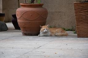 趴着拍摄看向正面的猫咪