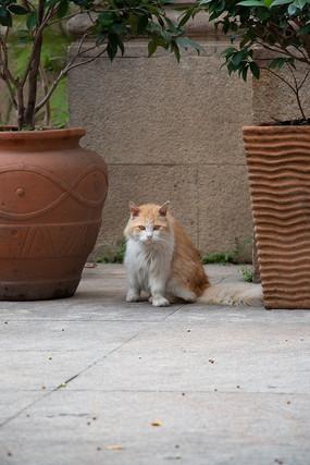 正面面对镜头的猫咪