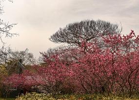 中山公园景观
