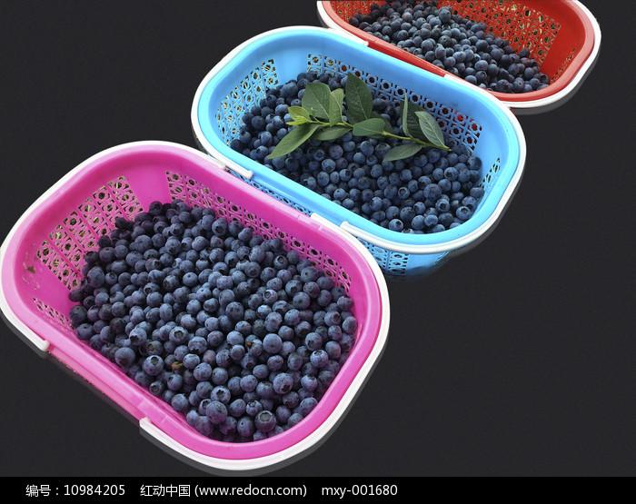 采摘一篮子蓝莓果