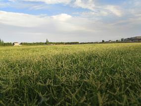 绿草地家园