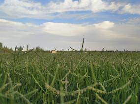 绿草如茵拍摄