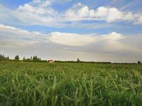 清晨草原天空
