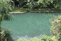 森林里的湖水