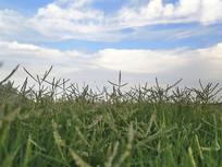 天空青草地