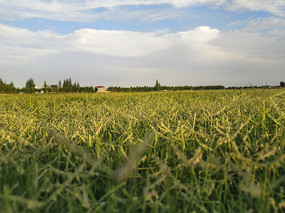 阳光洒在草地上