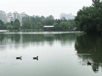 大宁公园景色