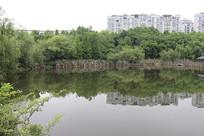 湖水一角风景