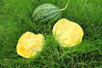 草地黄瓤西瓜