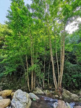河谷中的绿色树林