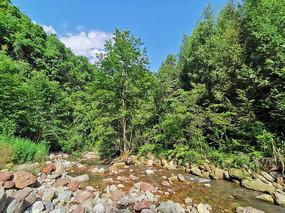 绿色的森林和溪流