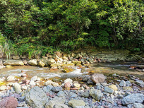 森林河谷溪流