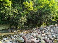 阳光下的森林小溪