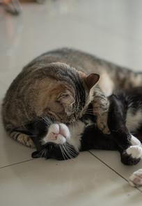 打闹嬉戏的两只猫兄弟