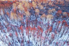 航拍大兴安岭雪原红柳风景