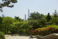 青岛植物园拍青岛城市