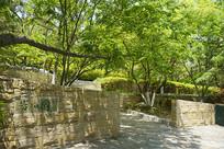 青岛植物园岩石园