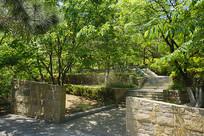 青岛植物园-岩石园