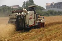 田间收割麦子