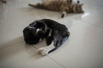 捂着脸的黑色小猫