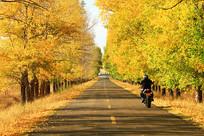 牙克石秋季树林公路风景
