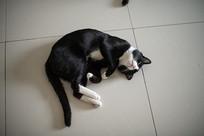 一只蜷缩身体的黑猫