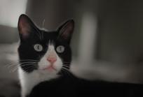 发现了鸟的黑猫