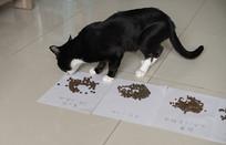 黑色猫咪试吃多种猫粮