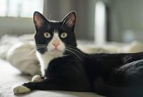 眼睛炯炯有神的黑猫