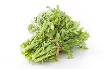 绿色蔬菜茼蒿菜白背景
