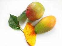 白底绿叶芒果