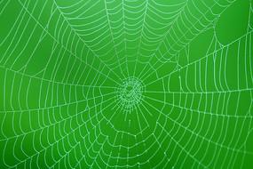 大兴安岭森林中的蜘蛛网