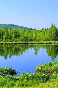 花草丰茂的森林湖
